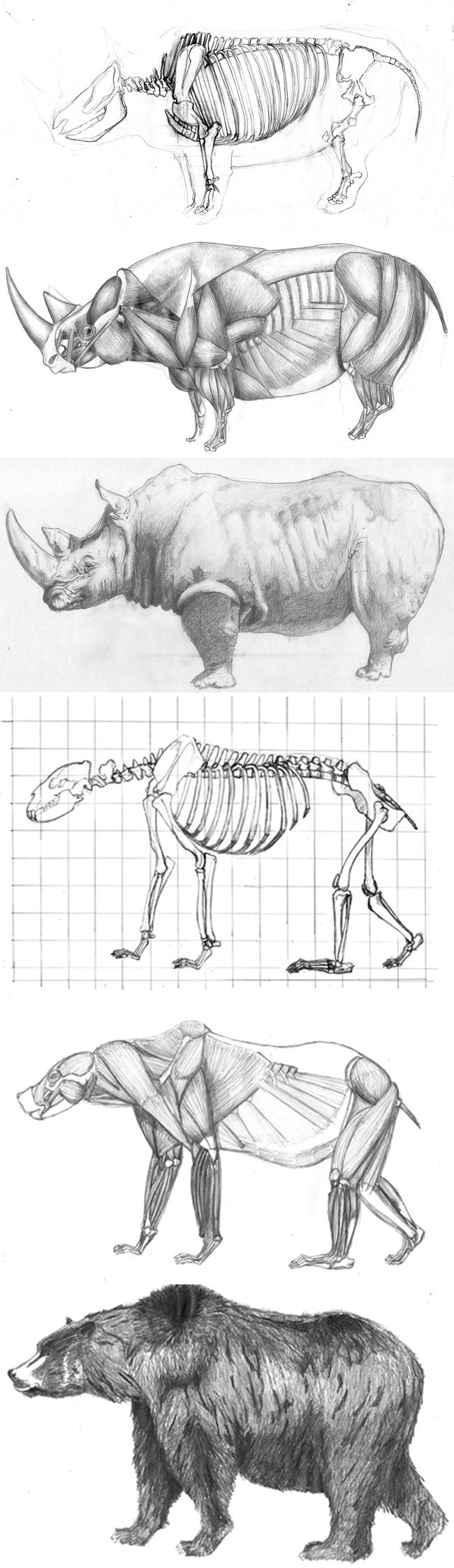 anatomia animal archivos - Cursos de Aerografía, Dibujo, Cómic e ...