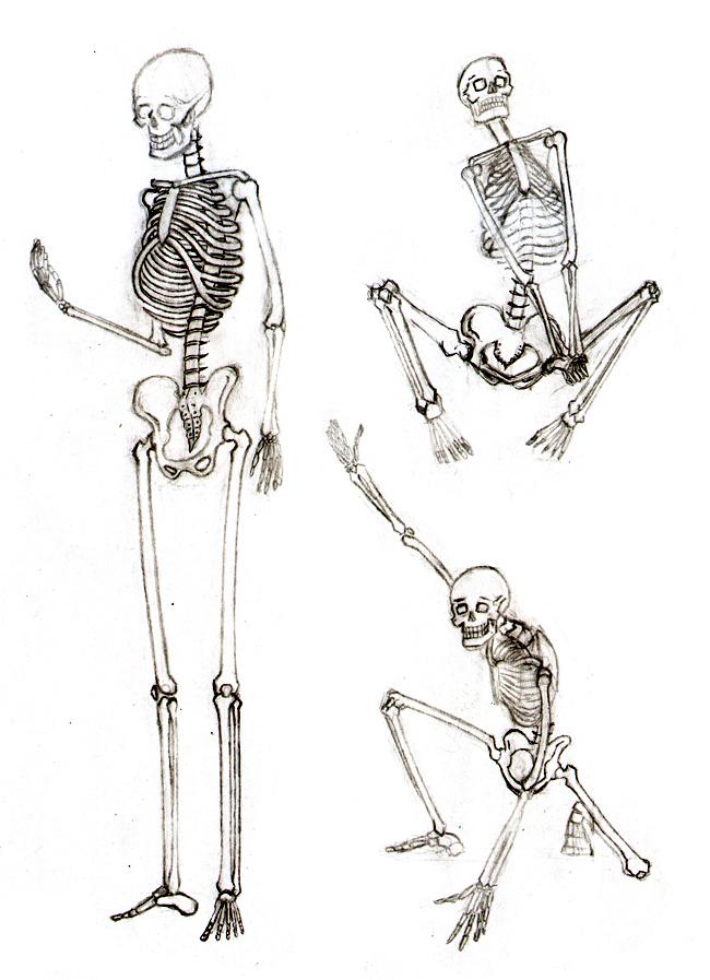 Magnífico Muestran La Anatomía Grises Foto - Anatomía de Las ...